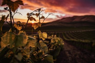 The great wines are born from charming estates